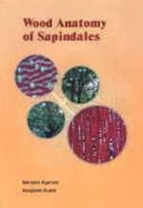 Wood Anatomy of Sapindales