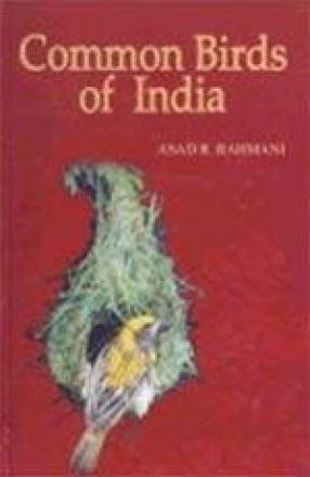 Common Birds of India