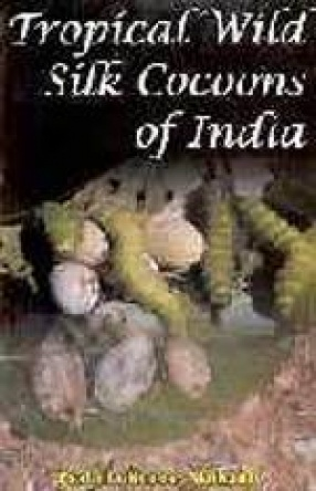Tropical Wild Silk Cocoons of India