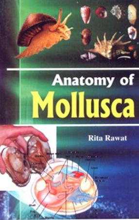 Anatomy of Mollusca