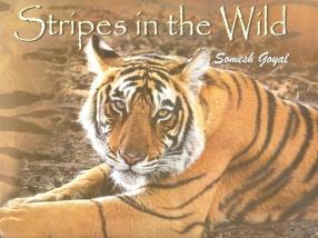 Stripes in the Wild