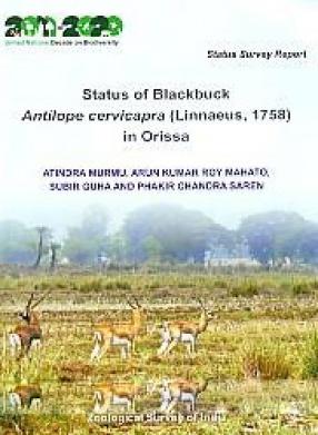 Status of Blackbuck: Antilope Cervicapra (Linnaeus, 1758) in Orissa