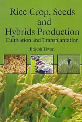 Rice Crop, Seeds and Hybrids Production: Cultivation and Transplantation