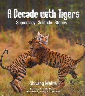 A Decade With Tigers: Supremacy Solitude Stripes