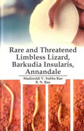 Rare and Threatened Limbless Lizard, Barkudia Insularis, Annandale