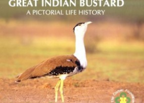 Great Indian Bustard: A Pictorial Life History