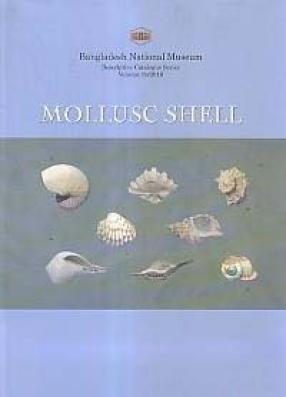 Mollusc Shells in Bangladesh National Museum