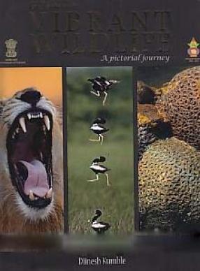 Gujarat's Vibrant Wildlife: A Pictorial Journey
