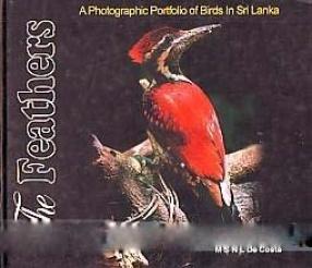 The Feathers: A Photographic Portfolio of Birds in Sri Lanka