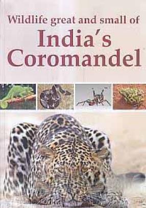 Wildlife Great and Small of India's Coromandel