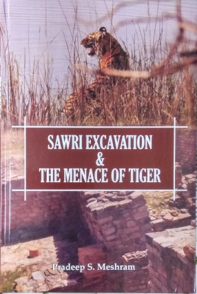Sawri Excavation and the Menace of Tiger