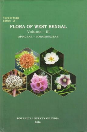 Flora of West Bengal Vol. III: Apiaceae-Boraginaceae