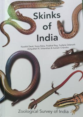 Skinks of India