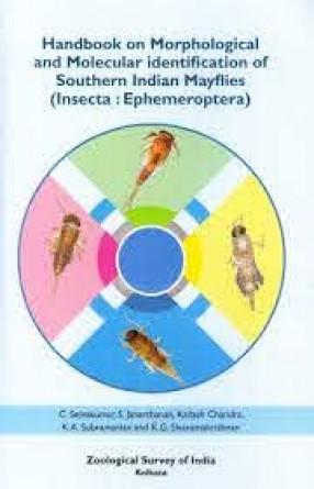 Handbook on Morphological and Molecular Identification of Southern Indian Mayflies (Insecta: Ephemeroptera)
