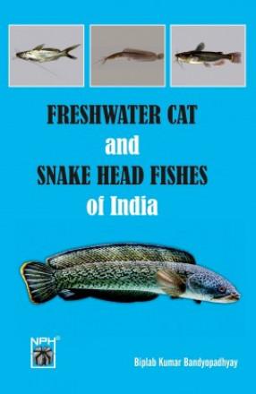 Freshwater Snakehead And Catfishes Of India