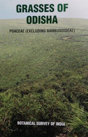 Grasses of Odisha: Poaceae (Excluding Bambusoideae)